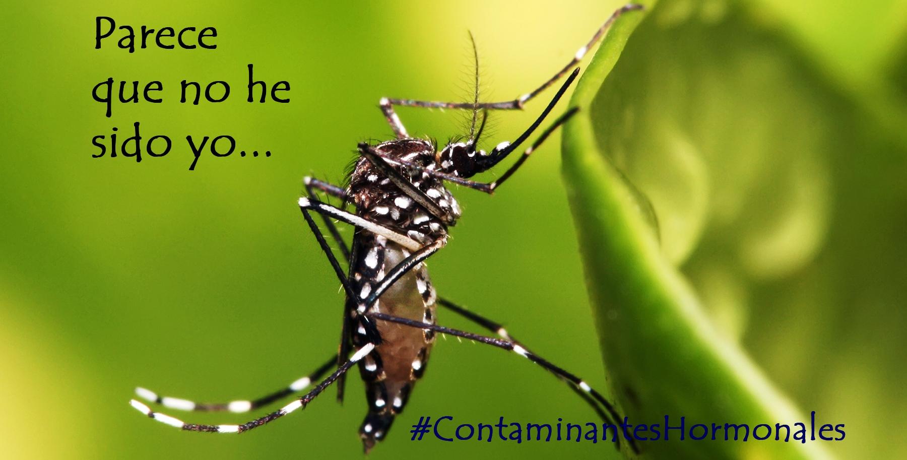 Mosquito Aedes aegepti transmisor del virus Zika, pero puede que inocente de la microcefalia