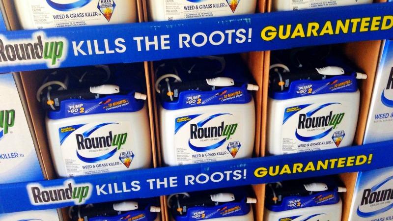Roundup-kills-the-roots-guaranteed
