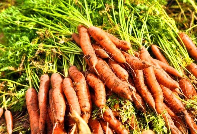 Mito pesticidas y agroecología