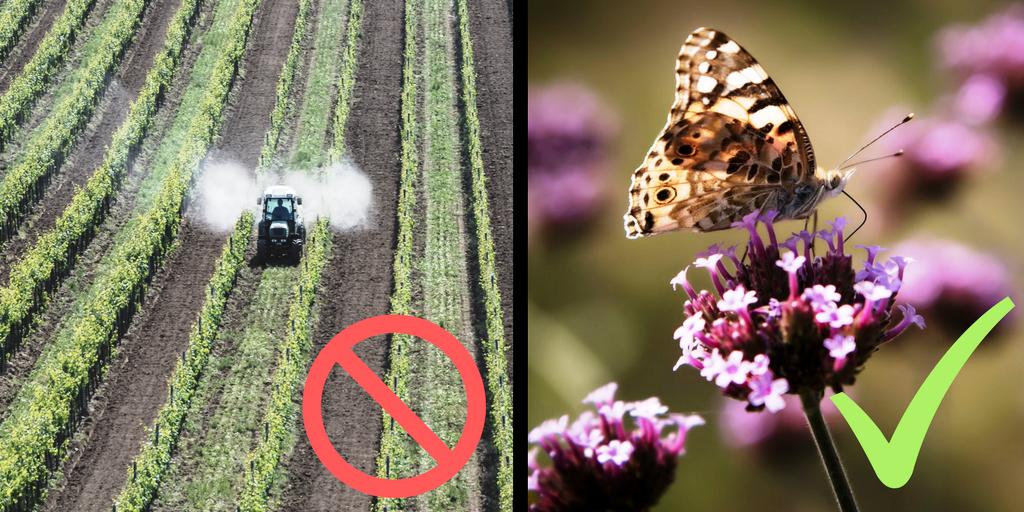 pesticidas en superficies de interés ecológico